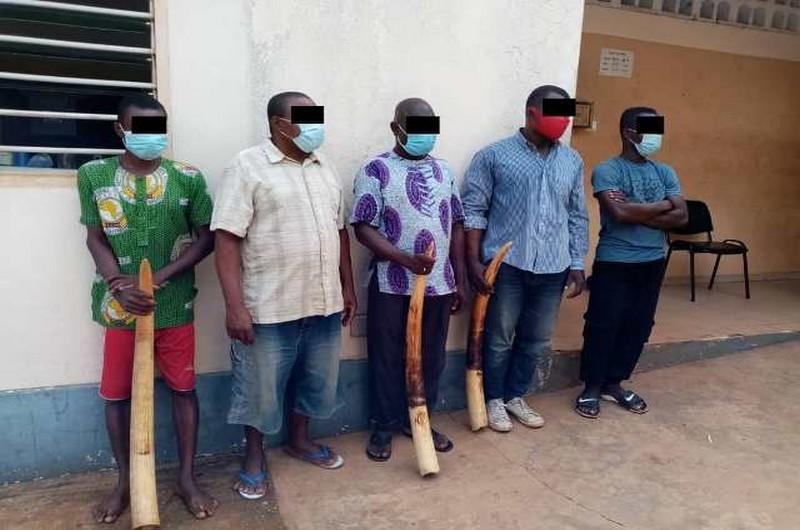 Justice togolaise condamne 5 trafiquants d'ivoire